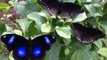 Istanbul Kelebek Ciftligi: Rencontrez les papillons